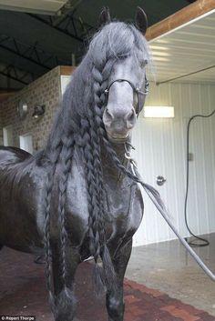(91) I Love Horses - Photos