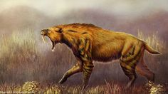 Smilodon populator by Rushelle Kucala