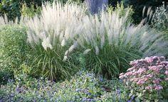 Ziergräser – leicht und elegant - Mittendrin oder dezent im Hintergrund: Mit farbenprächtigen Stauden kombiniert oder als markanter Blickpunkt am Teich – Ziergräser bringen Lebendigkeit in den Garten und sorgen mit prachtvollen Silhouetten und zarten Blüten für natürlichen Charme.