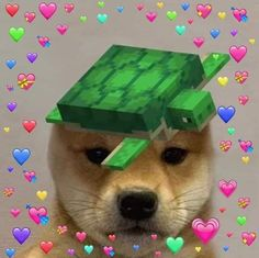 Animal Memes, Doge, Minecraft, Pup, Nostalgia, Cute Animals, Funny Memes, Icons, Wallpapers