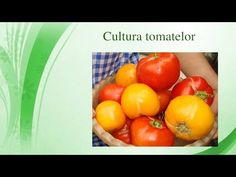 Cultura tomatelor - YouTube Gardening, Youtube, Culture, Garden, Lawn And Garden, Youtubers