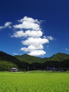 tannbo 田んぼ, rice field in Japan Japanese Landscape, Summer Memories, Japan Photo, Sky And Clouds, Great View, Japan Travel, Amazing Nature, Nature Photos, Beautiful Landscapes