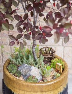 How to Make a Succulent Fairy Garden | AllFreeHolidayCrafts.com