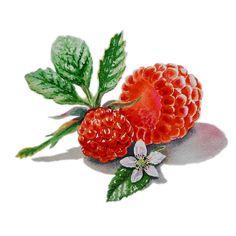 Raspberries Painting by Irina Sztukowski - Raspberries Fine Art Prints and Posters for Sale
