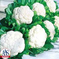 Cauliflower Snow Crown F1