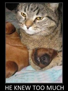 gangsta cat funny cute memes cat dog pets meme lol funny quote funny quotes humor