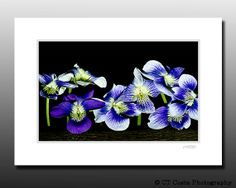 Wildflower Photo Blue Purple flowers Signed by CTCostaPhotography, $10.00
