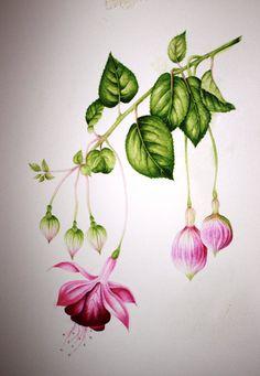 watercolour fuschia Shirley Bowman Fabric Painting, Watercolour Painting, Watercolor Flowers, Painting & Drawing, Botanical Drawings, Botanical Art, Color Pencil Art, Art And Illustration, Flower Art