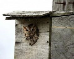 Attract Owls Into Your Garden: Tips For Making An Owl Nest Box