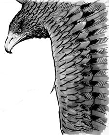 Rear cover image from Stunt Crow