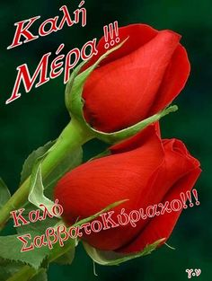 Beautiful Pink Roses, Good Morning, Facebook, Buen Dia, Bonjour, Good Morning Wishes