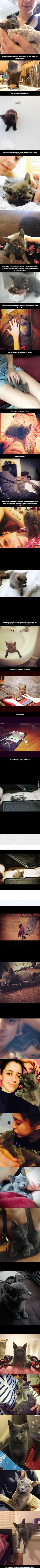 ♡♥Dmitrius the stray kitten from being found near death to becoming a healthy and happy cat 30 pics♥♡