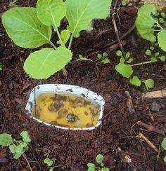 Como acabar com caracóis e lesmas na horta