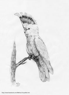 bird pencil drawings - Google zoeken