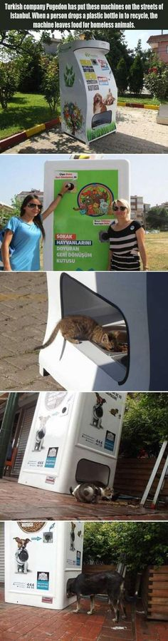 REPINED: A Treat For Homeless Animals.... why are we NOT doing this in the US?
