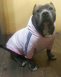 Image result for ropa perros mascotas Pitbulls, Hoodies, Dogs, Animals, Pet Dogs, Dog Clothing, Sweatshirts, Animales, Pit Bulls