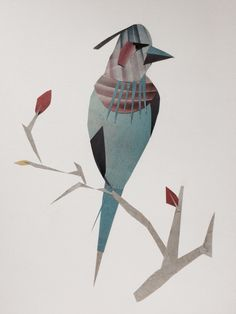 M.Y birds collections 2015