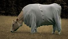 Bessie Dearest, Mrs Forrester's [Julia Mckenzie] precious pet cow fell into a lime pit and lost most of her hair. Mrs Forrester made Bessie Dearest P.J.s to keep her warm. Cranford...the series
