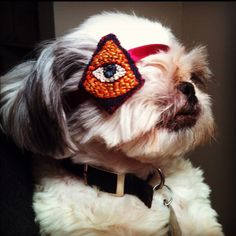 patches for one eyed dogs - Google Search