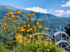 Blumenpracht im Eggerwirt Garten Mountains, Nature, Plants, Travel, Recovery, Paradise, Ghosts, Lawn And Garden, Naturaleza