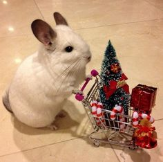 she's adorable and way ahead in her Christmas shopping!