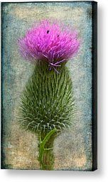 - Scotch Thistle Canvas Print by Garvin Hunter