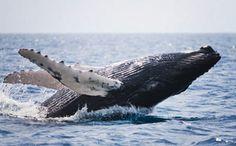 Marine Species Have Been Cut in Half in Just 40 Years