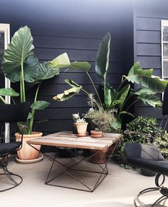 Patio of Sfgirlbybay's Victoria Smith | Poppytalk: 10 Trends on Our Radar for 2016 (Part 1)
