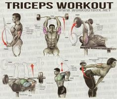 Triceps Workout - Healthy Fitness Workout Sixpack Back Calves - FITNESS HASHTAG