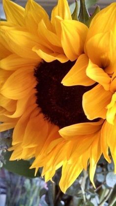 What a Glorious Looking Sunflower! Sunflower Pictures, Sunflower Art, Sunflower Fields, Sunflower Paintings, Sunflowers And Daisies, Growing Sunflowers, Sun Flowers, Poppies, Sunflower Wallpaper