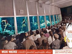 Weeki Wachee (Florida Attraction) brochure - Been there, done that Vintage Florida, Old Florida, Florida Travel, Weeki Wachee Florida, Dayton Beach, Weeki Wachee Mermaids, Famous Pictures, Pompano Beach, Roadside Attractions