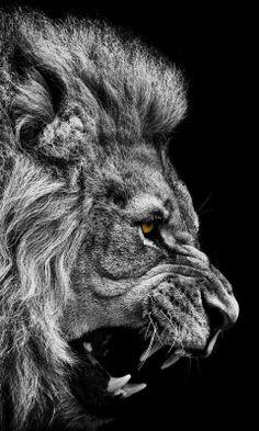 OPEN YOUR MIND Io ti insegno la ribellione! Emergi dalle masse. Ergiti solo, come un leone e vivi la tua vita secondo la tua stessa luce. (Osho)