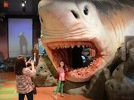 Family Fun in Fort Lauderdale, FL: Spend a day of discovery exploring two floors of fascinating interactive exhibits at the Museum of Discovery and Science – Only 20 minutes away from the homes at Central Parc Beach Vacation Tips, Florida Vacation, Florida Travel, Florida Keys, Florida Style, Vacation Ideas, Vacation Spots, Visit Florida, South Florida