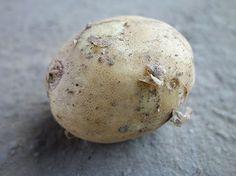 Yukon aardappel. Een Canadese aardappel. Een grote ovale tot ronde aardappel met goudgeel vruchtvlees en een zachtgele schil met roze ogen. Ontwikkelt in de kook een heerlijke smaak. Een allrounder dus geschikt voor koken, bakken, salade, frituur.