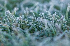 Frozen grass by ChristianThür Photography on Creative Market