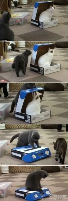 Cats are jerks! Geez! A little harsh closing another cat in a box!