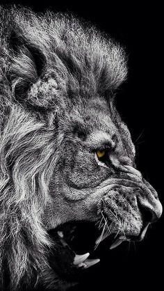 Dominance in a face. That is the Lion to me. The value of a lion…