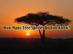 How Many Tree Species Do You Know? #Quiz made my #Playbuzz community member Sam Locklin! Play now