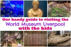 Our handy guide to visiting the World Museum Liverpool with the kids - Liverpool Echo