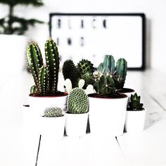 Is it strange that my favorite plant is cacti?  | #cactilove