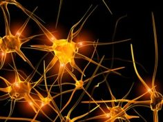 The quantum entanglement of minds- recent findings in the world of neuroscience and consciousness #quantum_mind #neuroscience