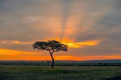 Maasai Mara Game Reserve in Kenya