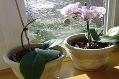 Minden virág földjére ezt a nagyon egyszerű dolgot öntötte. Pár nappal később nem hitt a szemének, amikor meglátta a virágait! - Tudasfaja.com