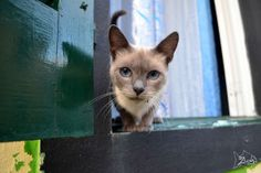 Beautiful cat wonders what the fuss is all about