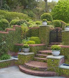 Vines climb brickwork, turning it into living arch...