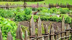 Jak mít zdravou zahradu bez chemie? Využijte schopnosti bylin už svou vůní odpuzovat škůdce, a tak je použít jako spolehlivou biologickou ochranu.