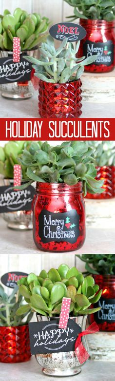Decorate your house with these festive Holiday Succulents or give them as gifts.