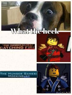 Everything a Ninjagian sees turns into something to do with Ninjago Every. Single. Thing.