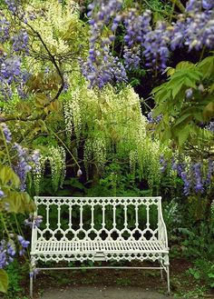 White wrought iron bench among the Wisteria