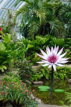 Wife, Mother, Gardener: Glass Waterlilies at Phipps Conservatory's Summer Show